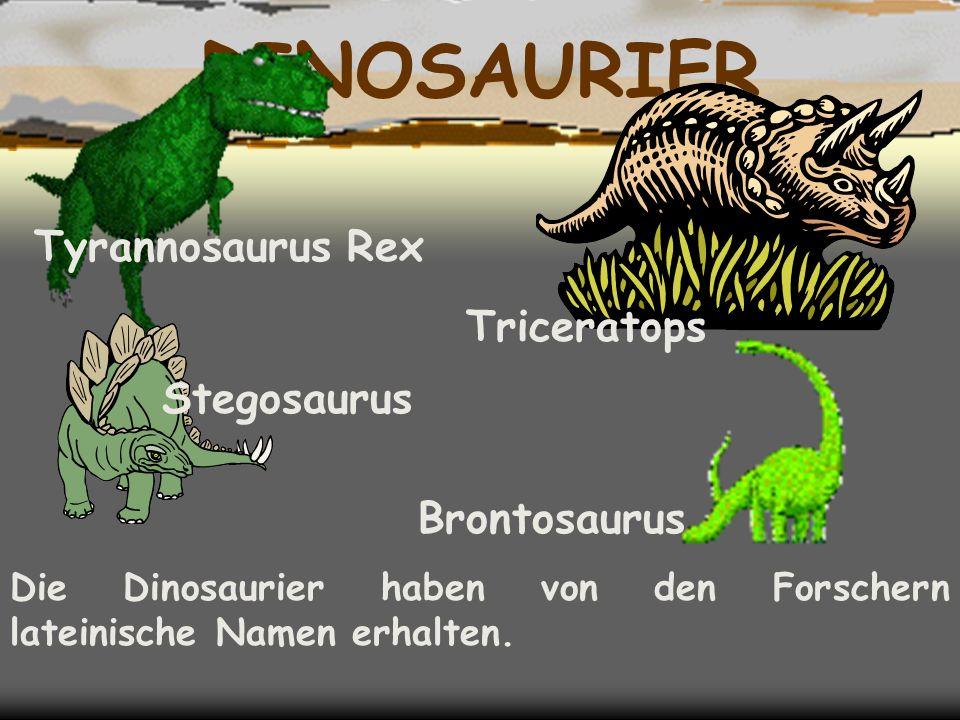 DINOSAURIER Die Dinosaurier haben von den Forschern lateinische Namen erhalten.