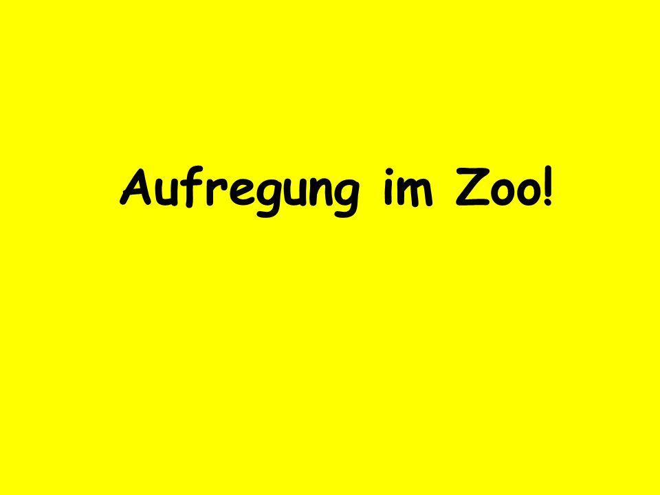 Aufregung im Zoo!