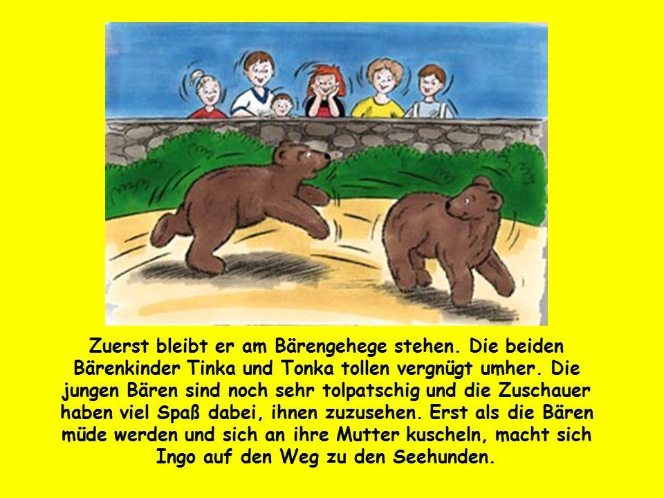Zuerst bleibt er am Bärengehege stehen. Die beiden Bärenkinder Tinka und Tonka tollen vergnügt umher. Die jungen Bären sind noch sehr tolpatschig und