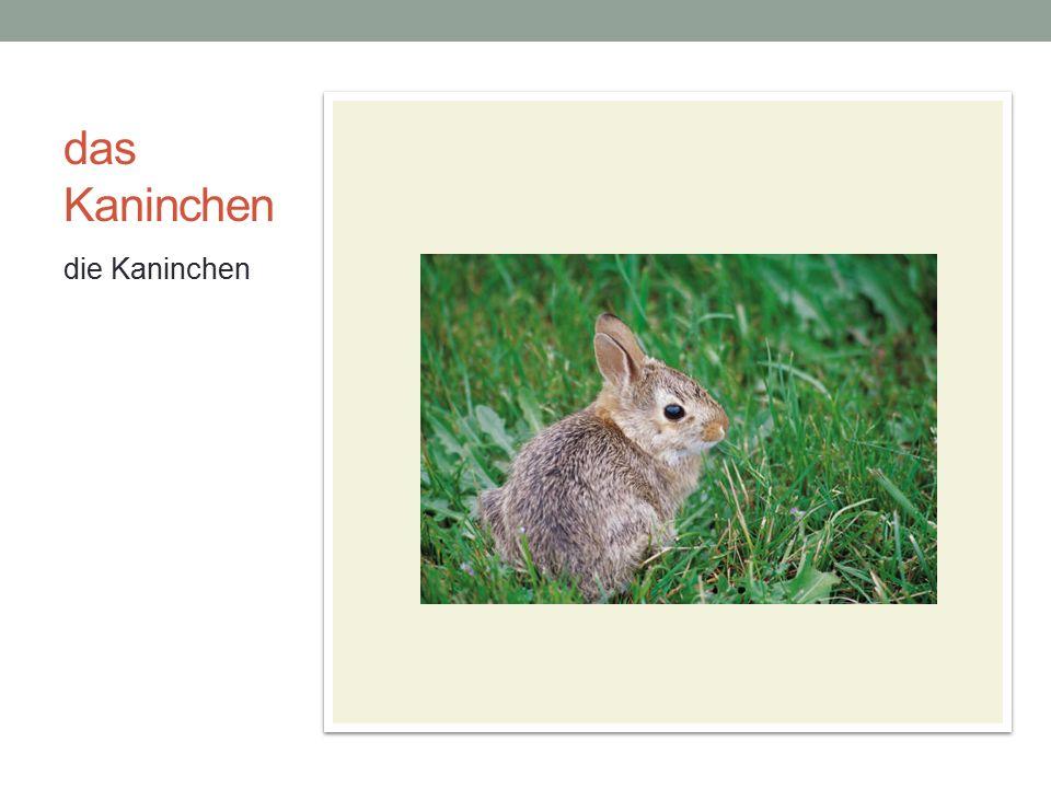 das Kaninchen die Kaninchen