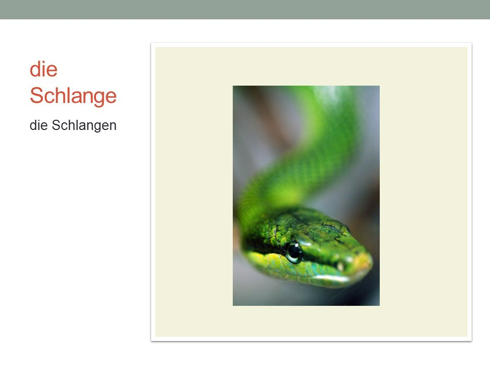 die Schlange die Schlangen