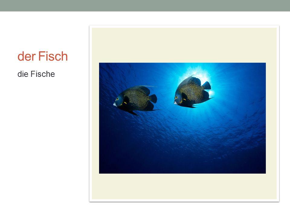 der Fisch die Fische