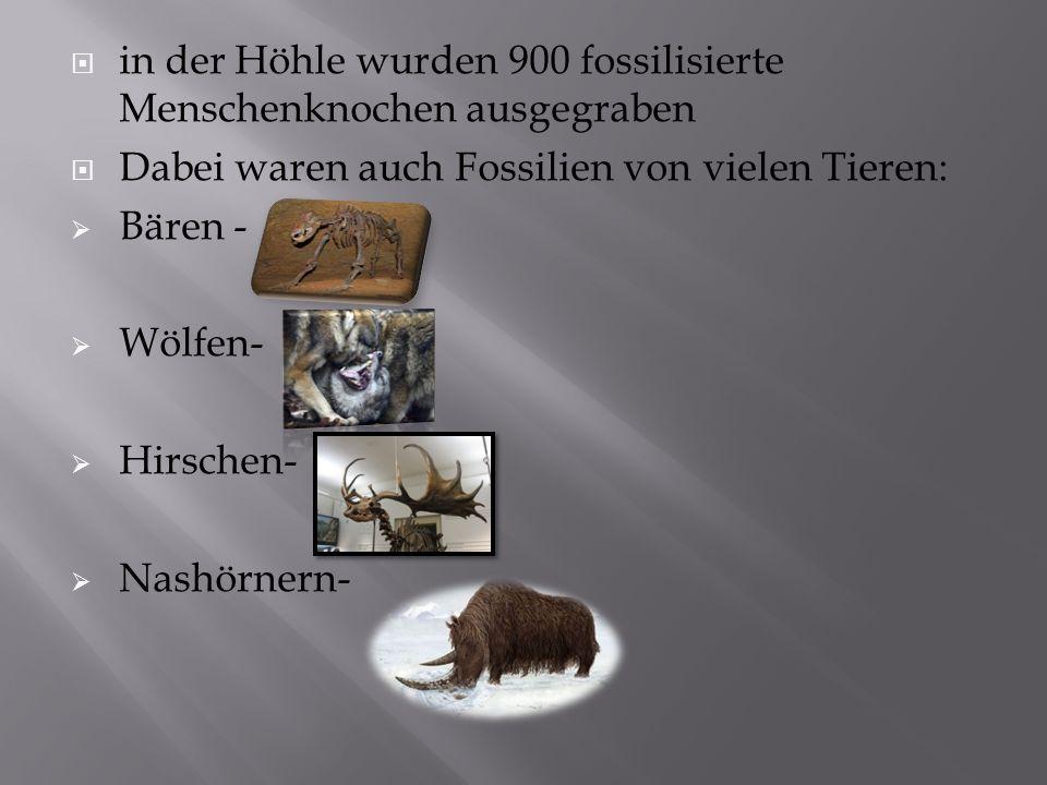  in der Höhle wurden 900 fossilisierte Menschenknochen ausgegraben  Dabei waren auch Fossilien von vielen Tieren:  Bären -  Wölfen-  Hirschen-  Nashörnern-