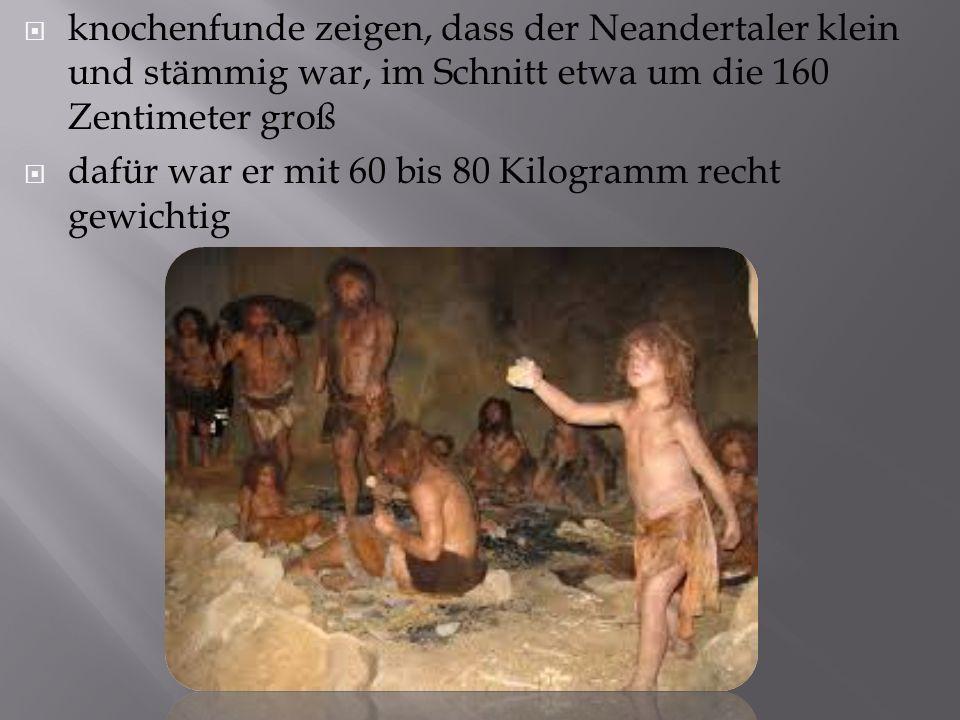  knochenfunde zeigen, dass der Neandertaler klein und stämmig war, im Schnitt etwa um die 160 Zentimeter groß  dafür war er mit 60 bis 80 Kilogramm recht gewichtig
