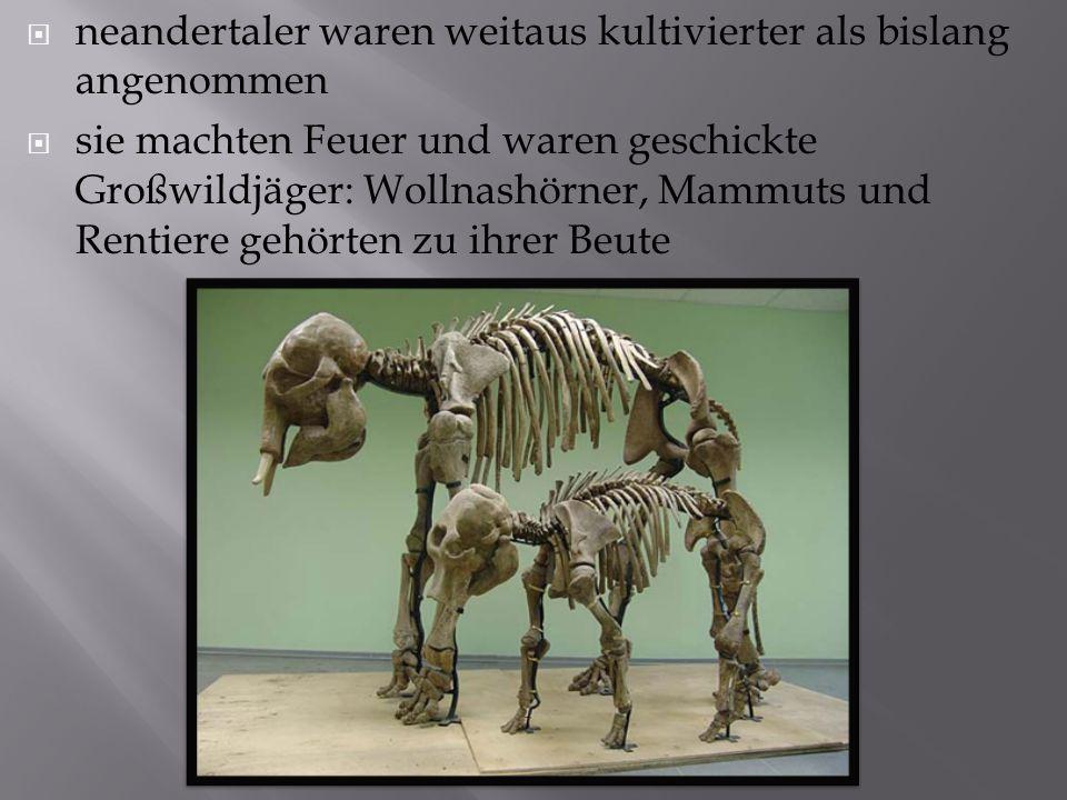 neandertaler waren weitaus kultivierter als bislang angenommen  sie machten Feuer und waren geschickte Großwildjäger: Wollnashörner, Mammuts und Rentiere gehörten zu ihrer Beute