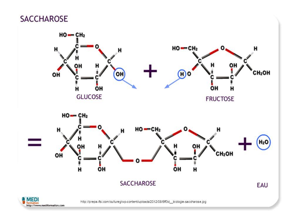 Polysaccharide Mehrere Monosaccharide aneinander Keine eigentliche Zucker => Kohlenhydrate Speicher und Gerüstsubstanz in Pflanzen und Tieren Stärke: Formel (C 6 H 10 0 5 )n; feines, weißes Pulver; in ca 70°C Wasser löslich, geruchs- und geschmacksfrei, aus fotosynthetischer Glukose Glykogen, Zellulose (Papierherstellung)