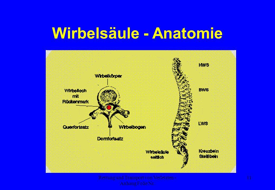 Rettung und Transport von Verletzten - Anhang Folie Nr. 11 Wirbelsäule - Anatomie