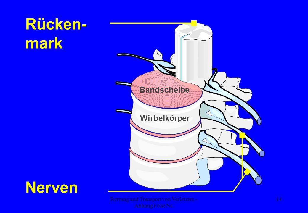Rettung und Transport von Verletzten - Anhang Folie Nr. 14 Bandscheibe Wirbelkörper Rücken- mark Nerven