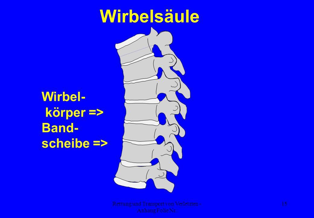 Rettung und Transport von Verletzten - Anhang Folie Nr. 15 Wirbel- körper => Band- scheibe => Wirbelsäule