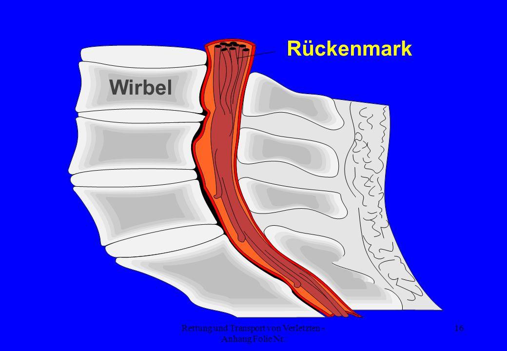 Rettung und Transport von Verletzten - Anhang Folie Nr. 16 Wirbel Rückenmark
