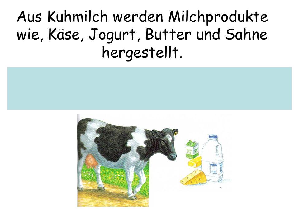 Aus Kuhmilch werden Milchprodukte wie, Käse, Jogurt, Butter und Sahne hergestellt.