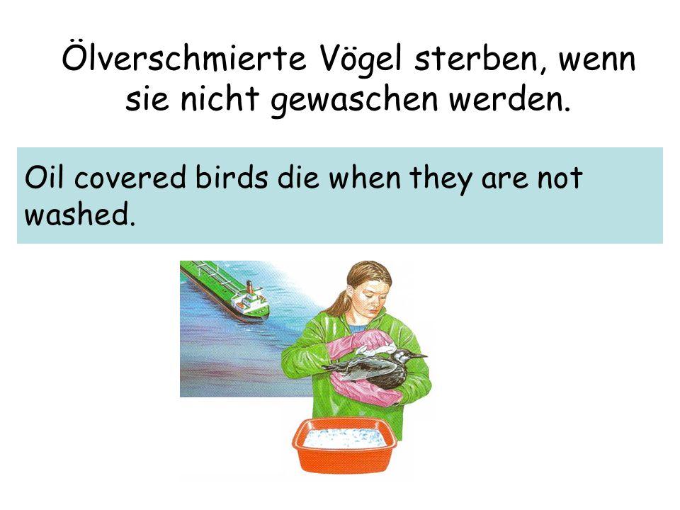 Ölverschmierte Vögel sterben, wenn sie nicht gewaschen werden.