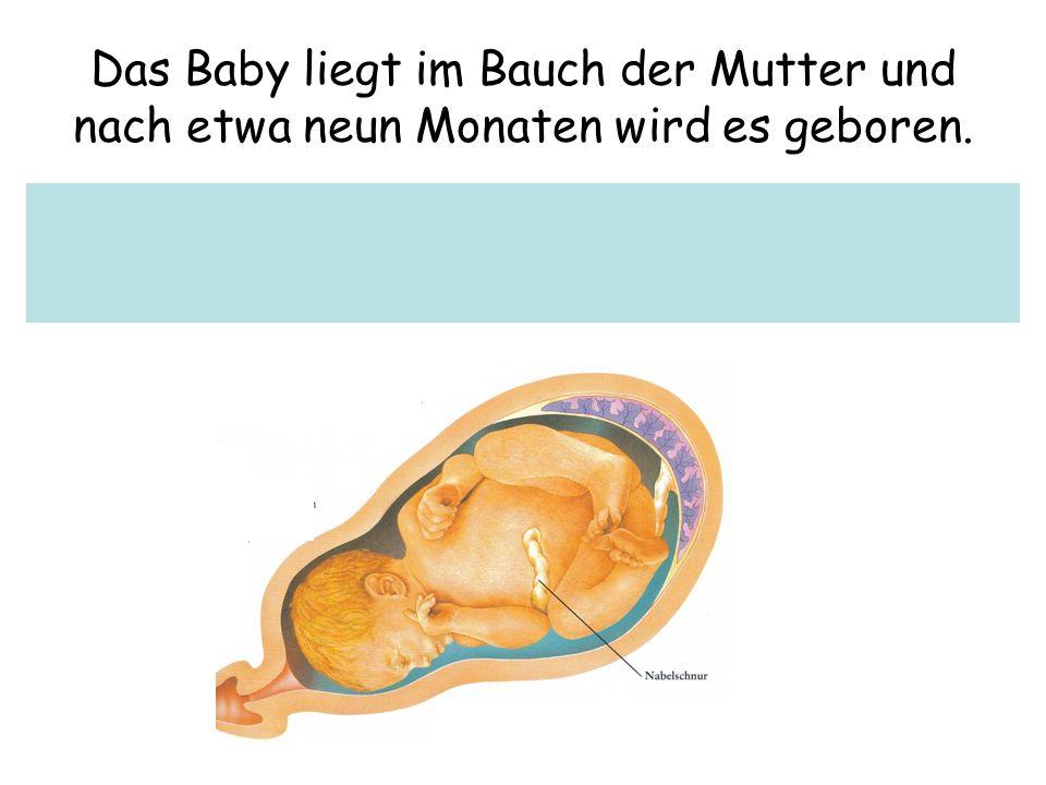 Das Baby liegt im Bauch der Mutter und nach etwa neun Monaten wird es geboren.