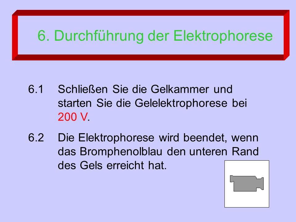 6.1Schließen Sie die Gelkammer und starten Sie die Gelelektrophorese bei 200 V.
