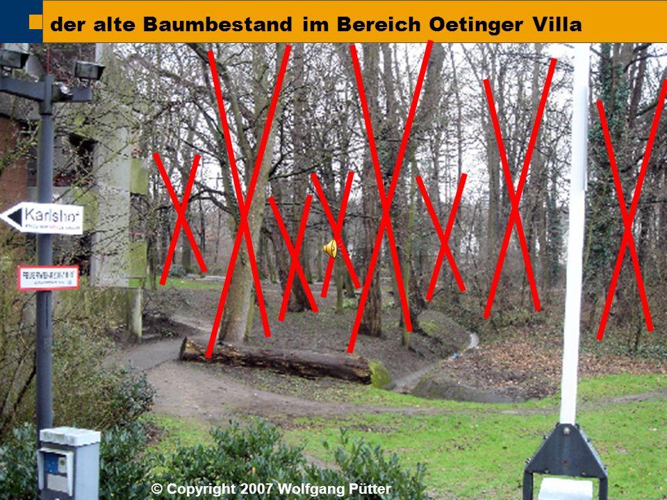  BI ONO ( Wolfgang Pütter) der alte Baumbestand im Bereich Oetinger Villa © Copyright 2007 Wolfgang Pütter
