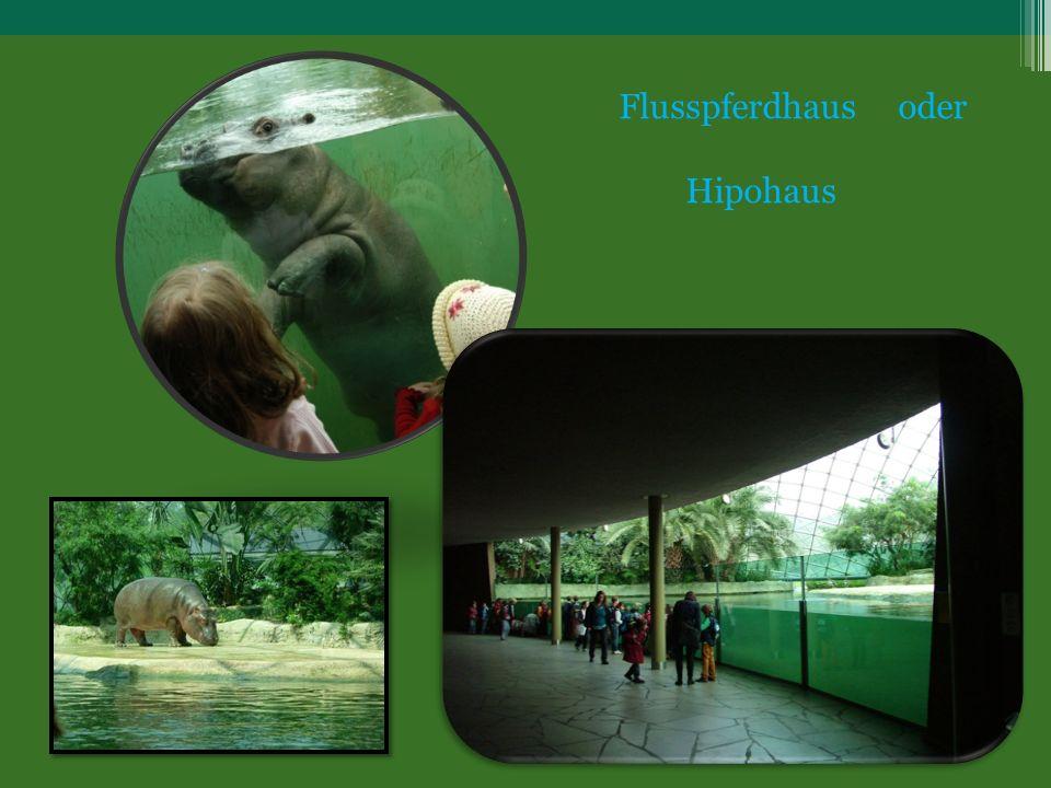 Flusspferdhaus oder Hipohaus