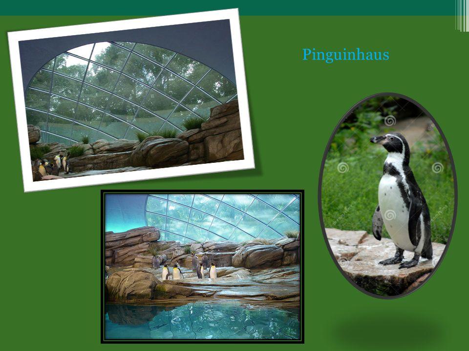 Pinguinhaus
