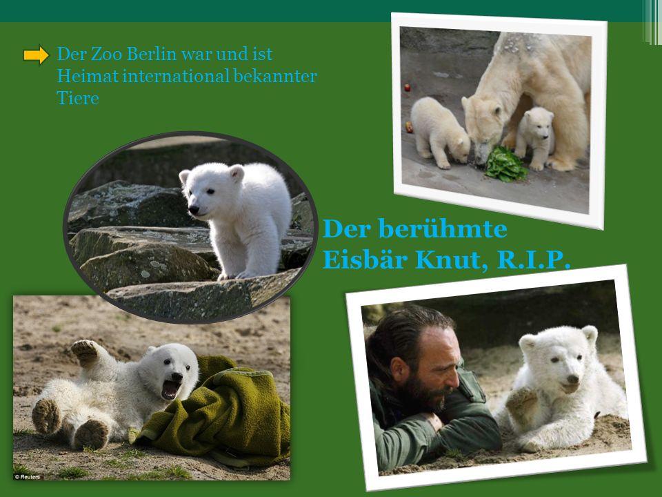 Der berühmte Eisbär Knut, R.I.P. Der Zoo Berlin war und ist Heimat international bekannter Tiere