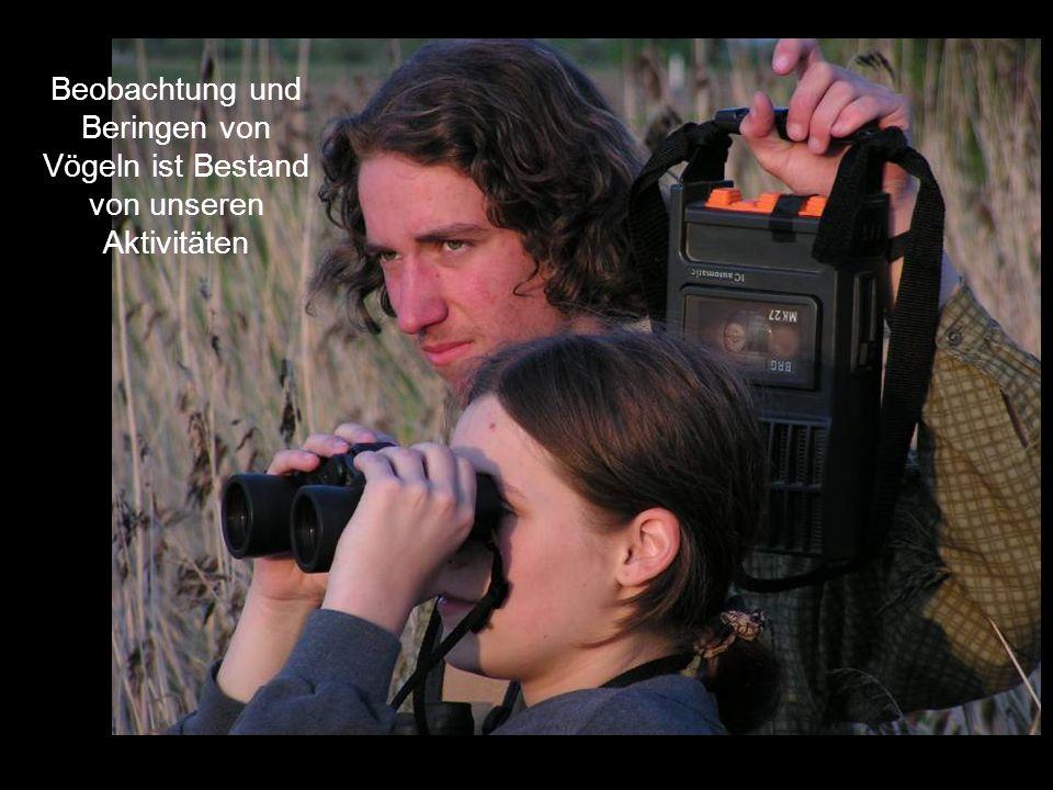 Beobachtung und Beringen von Vögeln ist Bestand von unseren Aktivitäten