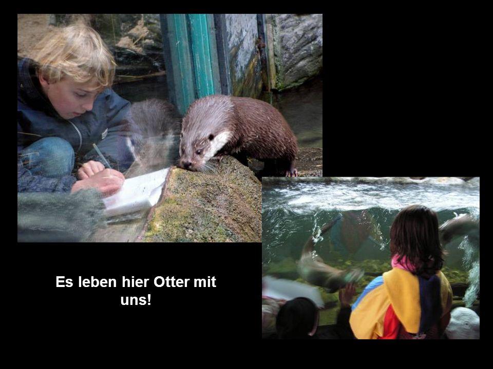 Es leben hier Otter mit uns!