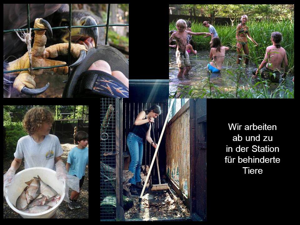 Wir arbeiten ab und zu in der Station für behinderte Tiere
