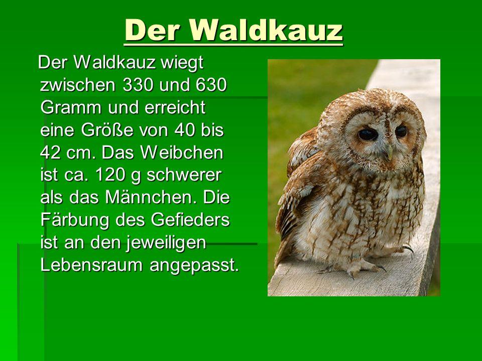 Der Waldkauz Der Waldkauz Der Waldkauz wiegt zwischen 330 und 630 Gramm und erreicht eine Größe von 40 bis 42 cm. Das Weibchen ist ca. 120 g schwerer