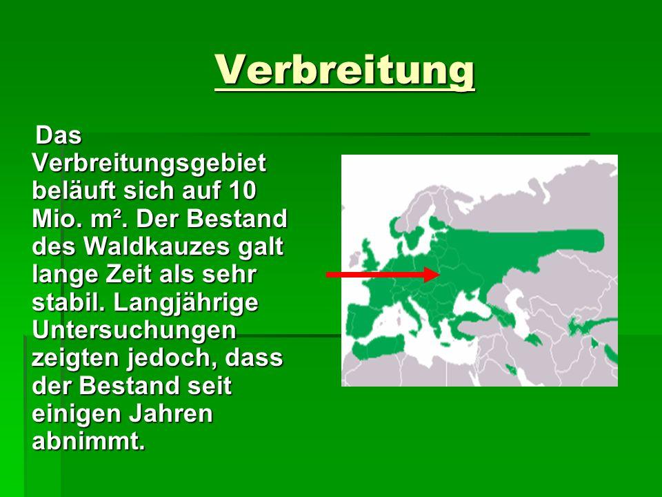 Verbreitung Verbreitung Das Verbreitungsgebiet beläuft sich auf 10 Mio. m². Der Bestand des Waldkauzes galt lange Zeit als sehr stabil. Langjährige Un