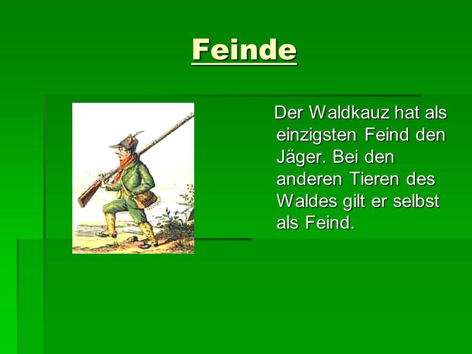 Quellen - www.von-keutz.de - Wikipedia - Google-Bildersuche - Eulen:Waldkauz
