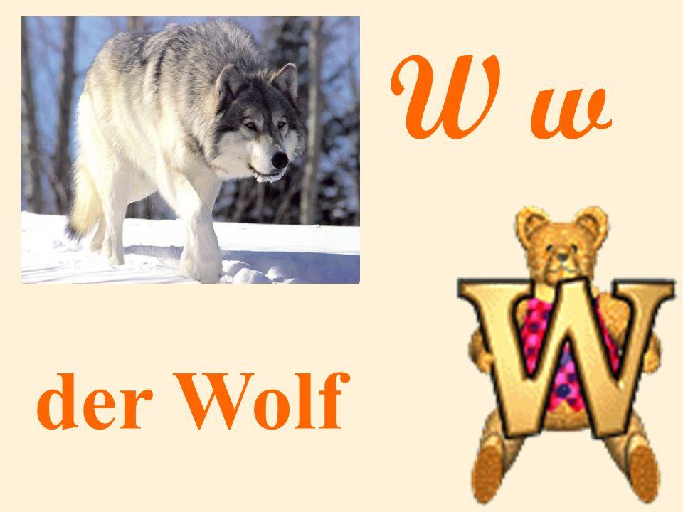 W w der Wolf