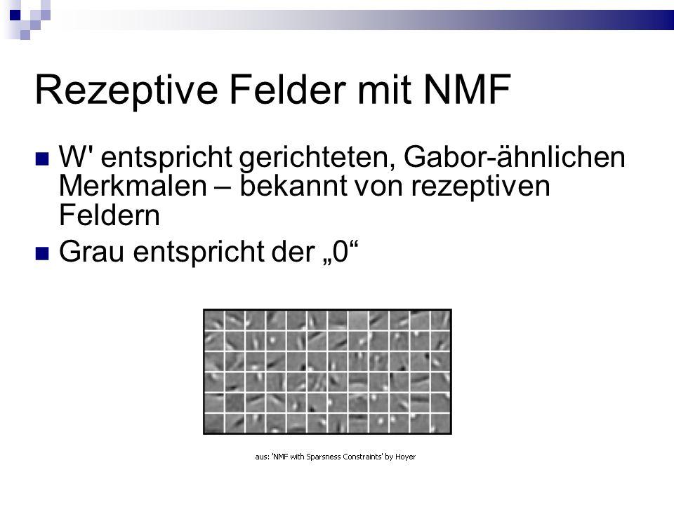 """Rezeptive Felder mit NMF W entspricht gerichteten, Gabor-ähnlichen Merkmalen – bekannt von rezeptiven Feldern Grau entspricht der """"0"""