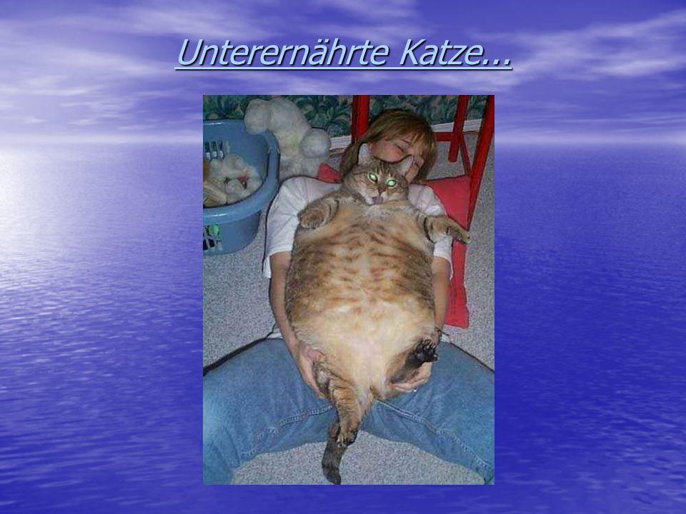 Unterernährte Katze...