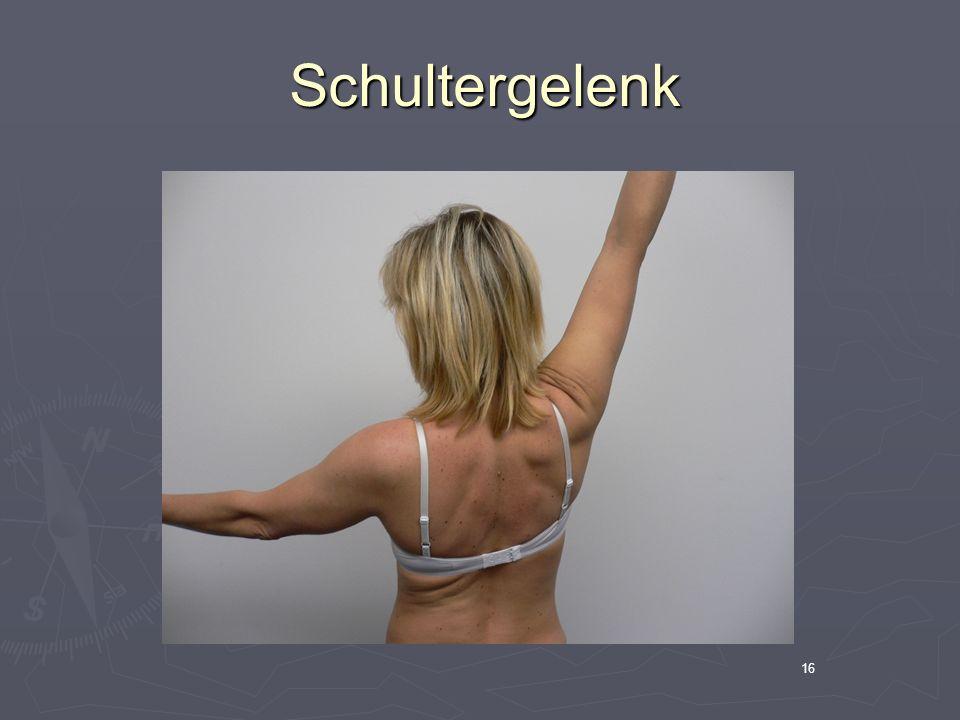 16 Schultergelenk Schultergelenk