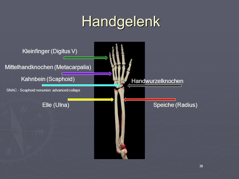 38 Handgelenk Handgelenk Handwurzelknochen Elle (Ulna)Speiche (Radius) Mittelhandknochen (Metacarpalia) Kleinfinger (Digitus V) Kahnbein (Scaphoid) SN