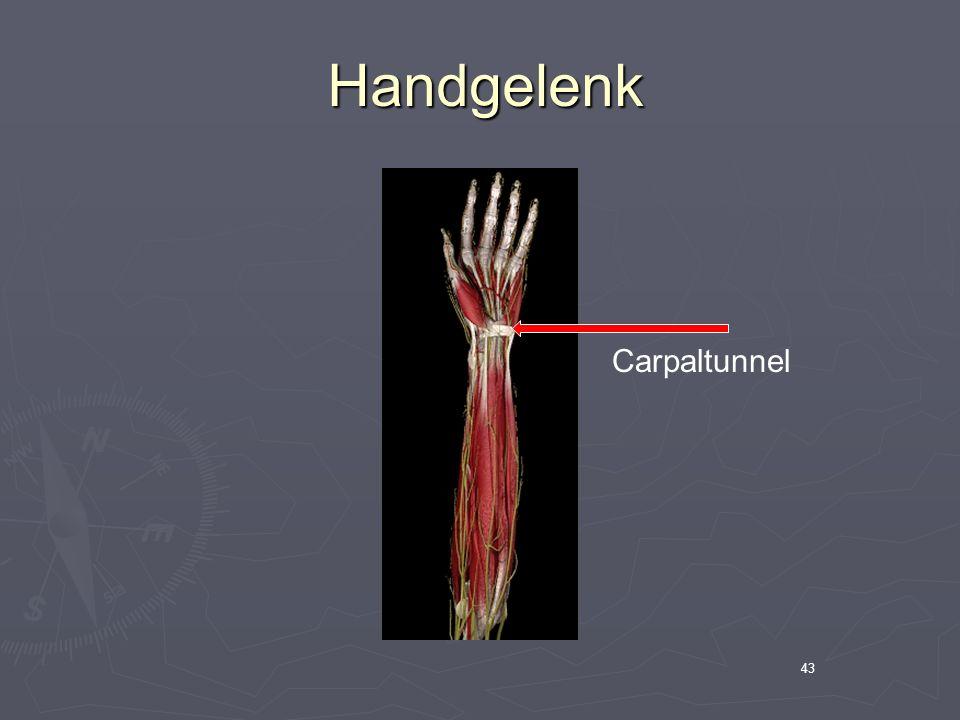 43 Handgelenk Handgelenk Carpaltunnel