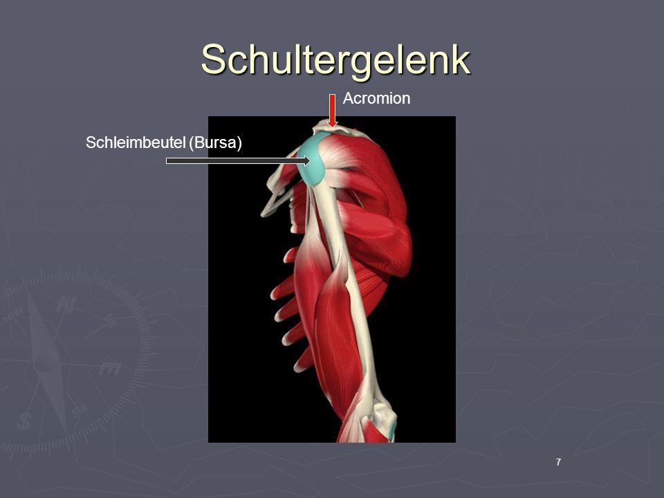 8 Schultergelenk Schultergelenk BrustmuskulaturDeltamuskel