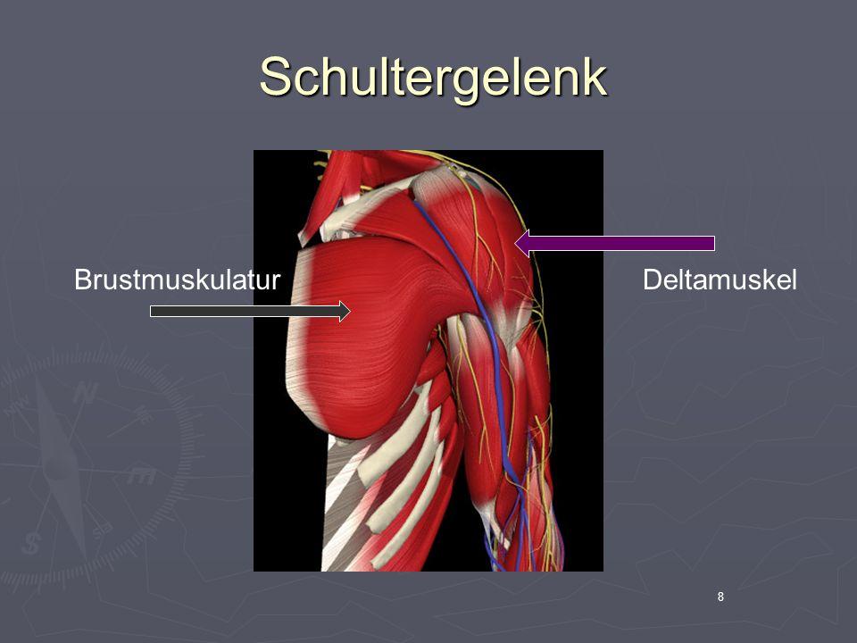9 Schultergelenk Schultergelenk Nervenwurzel Plexus brachialis Periphere Nerven, z.B.