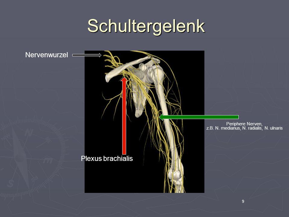 9 Schultergelenk Schultergelenk Nervenwurzel Plexus brachialis Periphere Nerven, z.B. N. medianus, N. radialis, N. ulnaris