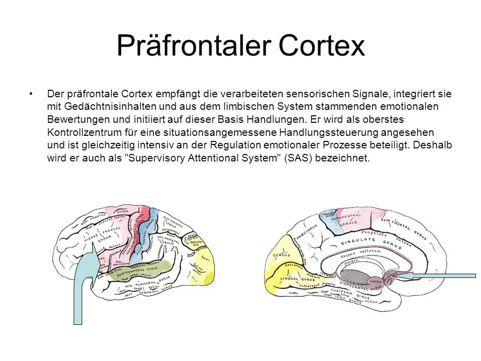 Präfrontaler Cortex Der präfrontale Cortex empfängt die verarbeiteten sensorischen Signale, integriert sie mit Gedächtnisinhalten und aus dem limbischen System stammenden emotionalen Bewertungen und initiiert auf dieser Basis Handlungen.