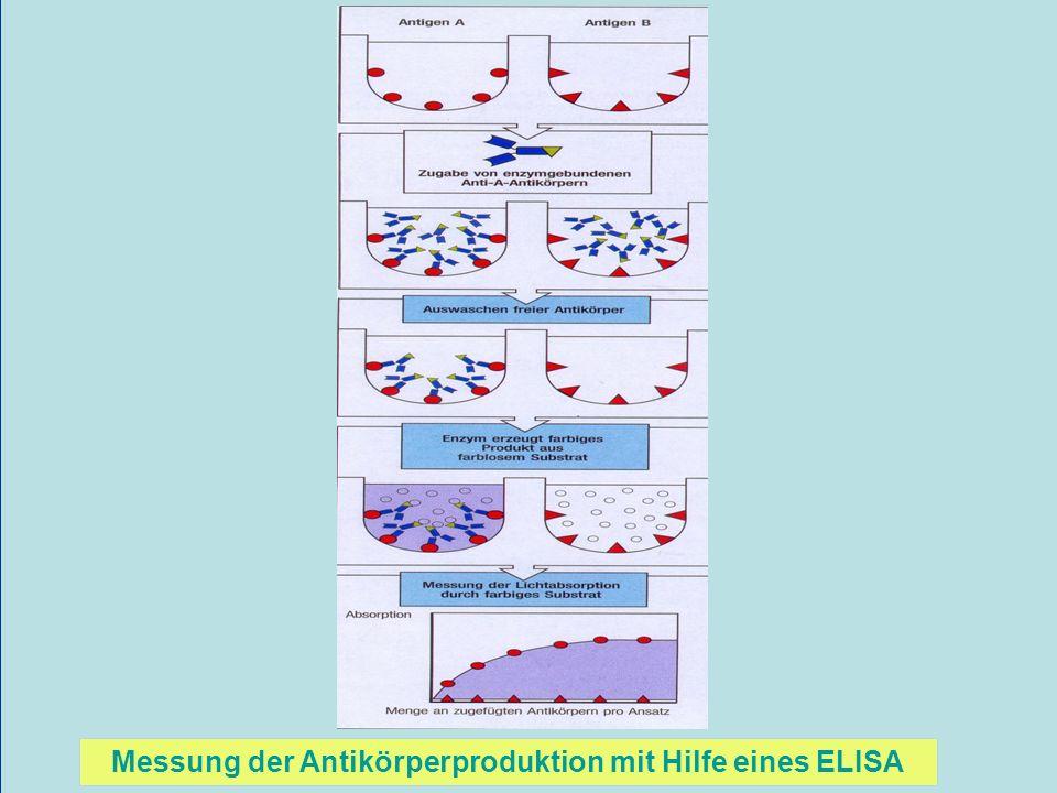 Messung der Antikörperproduktion mit Hilfe eines ELISA