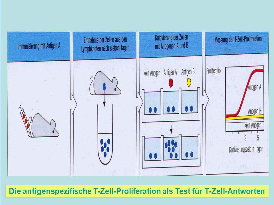Die antigenspezifische T-Zell-Proliferation als Test für T-Zell-Antworten