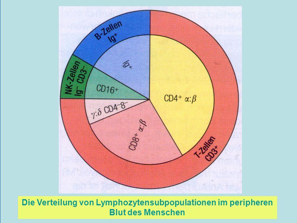 Die Verteilung von Lymphozytensubpopulationen im peripheren Blut des Menschen