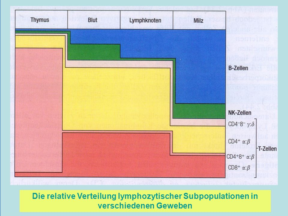 Die relative Verteilung lymphozytischer Subpopulationen in verschiedenen Geweben