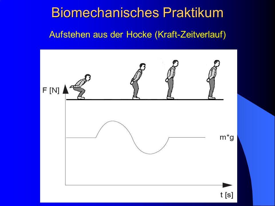 Aufstehen aus der Hocke (Kraft-Zeitverlauf) Biomechanisches Praktikum