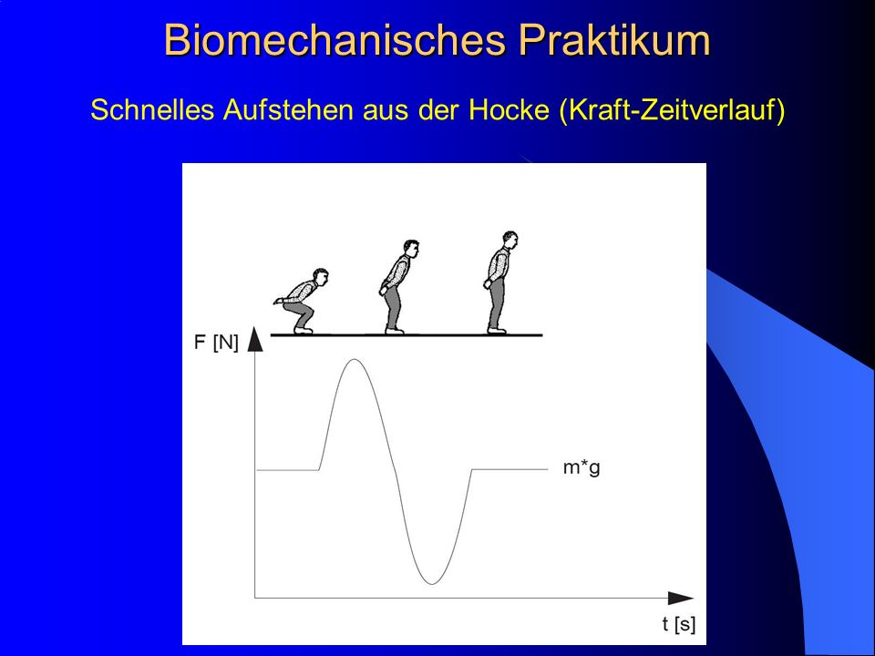 Schnelles Aufstehen aus der Hocke (Kraft-Zeitverlauf) Biomechanisches Praktikum