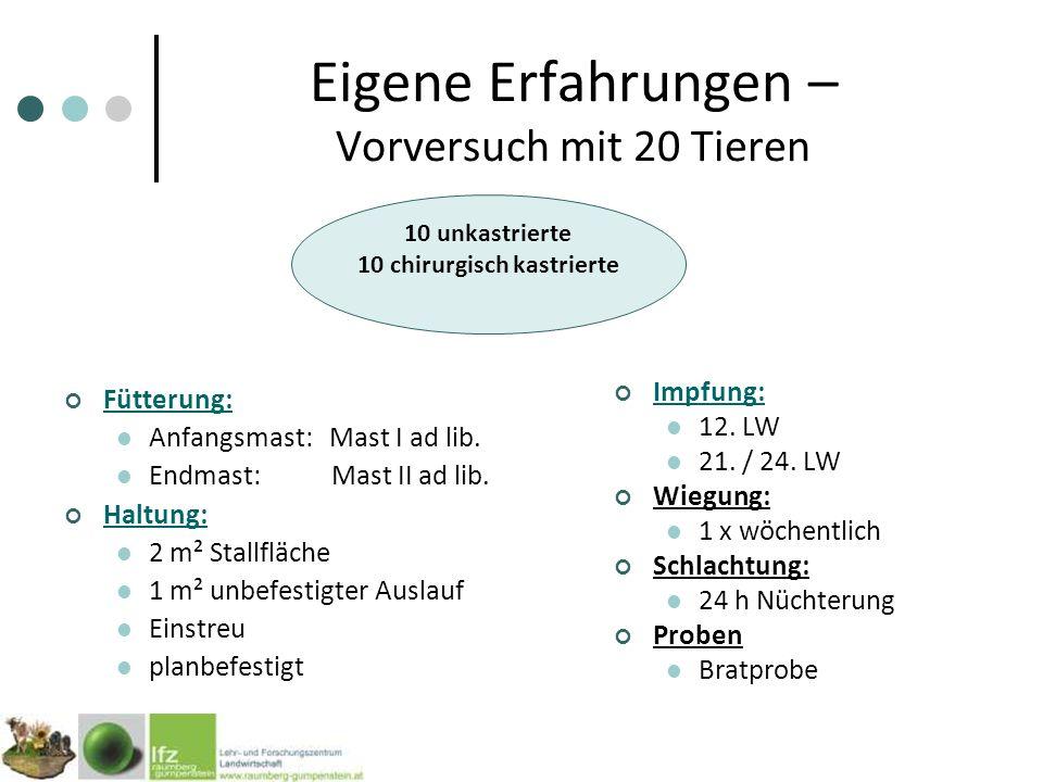 Eigene Erfahrungen – Vorversuch mit 20 Tieren Fütterung: Anfangsmast: Mast I ad lib.