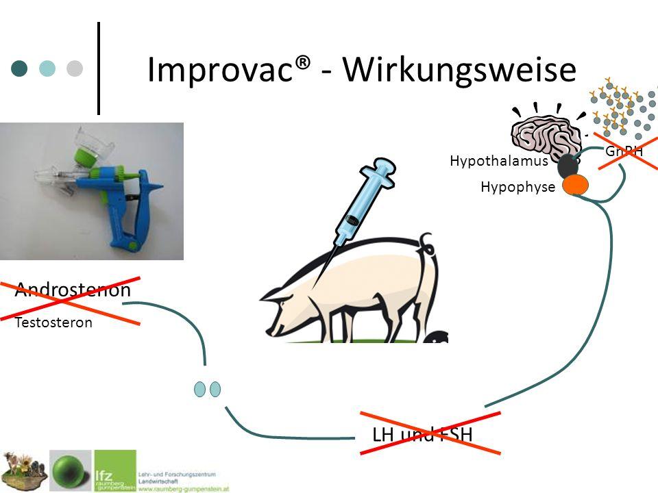 Improvac® - Wirkungsweise GnRH Hypothalamus Hypophyse LH und FSH Androstenon Testosteron