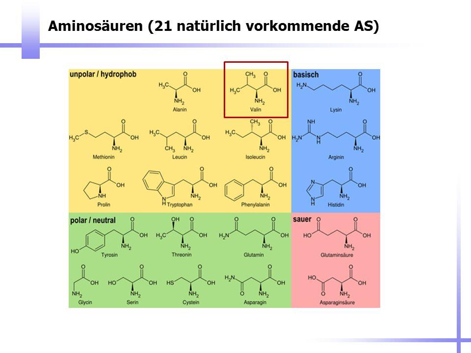 Aminosäuren (21 natürlich vorkommende AS)