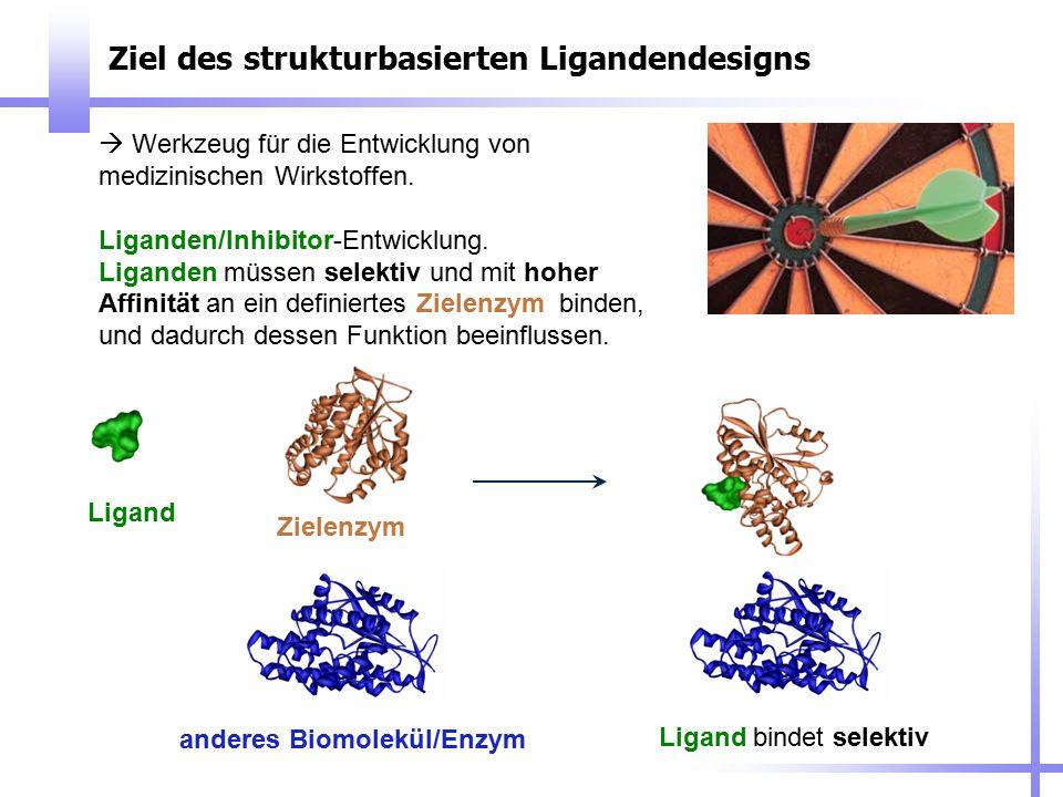 Ziel des strukturbasierten Ligandendesigns  Werkzeug für die Entwicklung von medizinischen Wirkstoffen. Liganden/Inhibitor-Entwicklung. Liganden müss