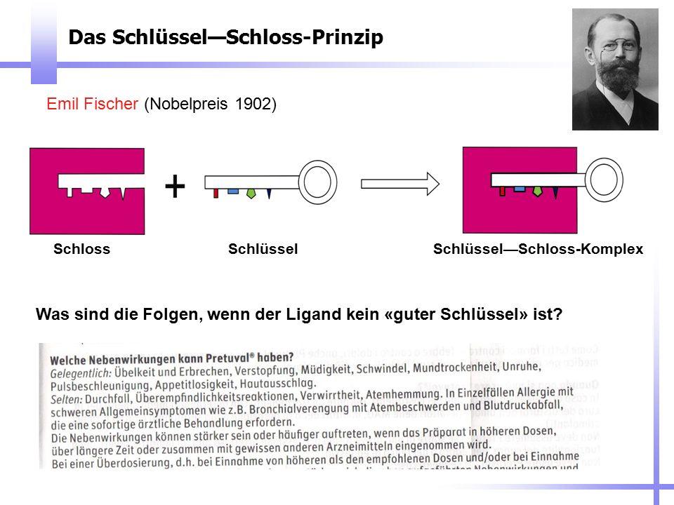 Das Schlüssel—Schloss-Prinzip Emil Fischer (Nobelpreis 1902) SchlossSchlüsselSchlüssel—Schloss-Komplex Was sind die Folgen, wenn der Ligand kein «gute