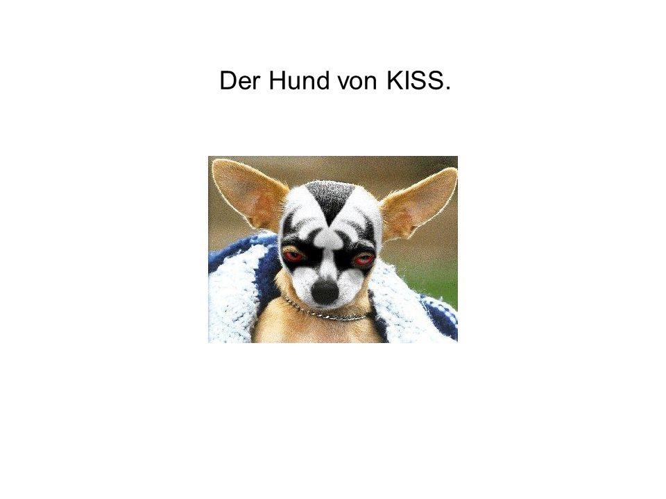 Der Hund von KISS.